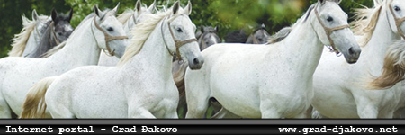 Internet portal - grad Đakovo