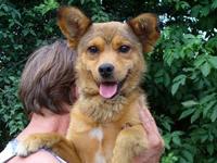 Pas, Psi, zaštita životinja, udomljavanje pasa